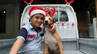 Happy Animals Club Brings Cheers to Stray Dogs in the Philippines